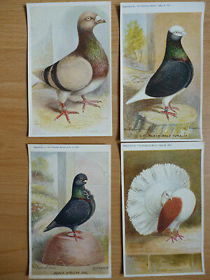 4x  THE FEATHERED WORLD VINTAGE  POSTCARDS PIGEONS   (LOT 11)