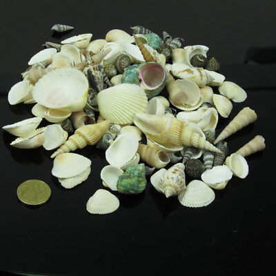 250-500-1000 g seashells ,mix in bag ,sea shells, beach shells, assorted ,craft