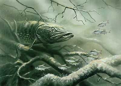 PIKE FISH FISHING POSTER a - VARIOUS SIZES - INCLUDES FREE UK P&P