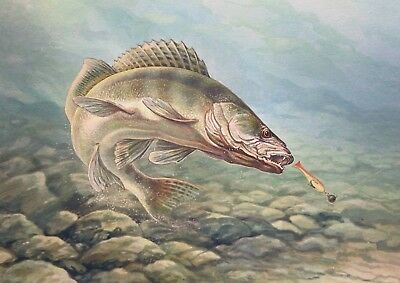 PIKE FISH FISHING POSTER b - VARIOUS SIZES - INCLUDES FREE UK P&P