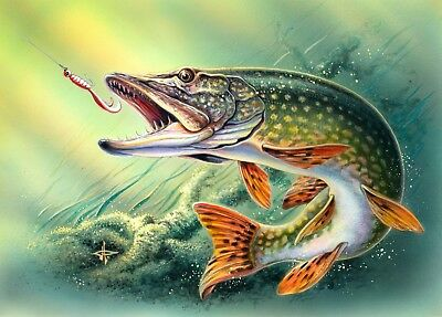 PIKE FISH FISHING POSTER c - VARIOUS SIZES - INCLUDES FREE UK P&P