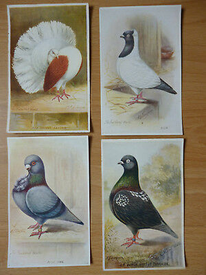 4x  THE FEATHERED WORLD VINTAGE  POSTCARDS PIGEONS