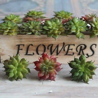Mini Fresh Flowers Succulent Plants Decorations Potted Living Room Greenery Gift