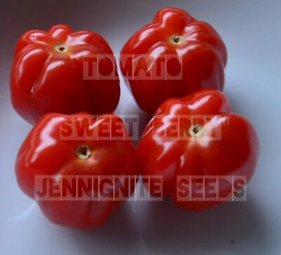 TOMATO 'SWEET BERRY' FRENCH HEIRLOOM 10 Seeds *All photographs are my own 🌻🐝🐞