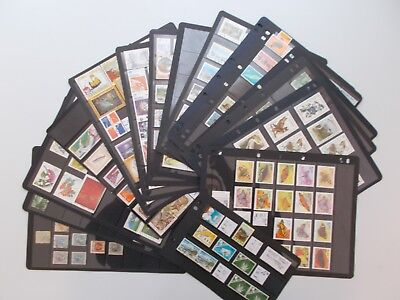Caribbean. Used & mint collection on stockcards. See pics for info.