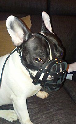 Champion Light Black leather Dog Muzzle for French Bulldog Frenchies FB2 Male