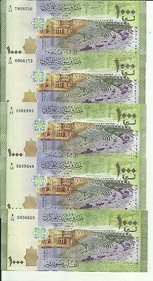 SYRIA LOT 5x 1000 POUNDS 2013  P 116. VF-XF CONDITION. 6RW 3MAI