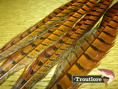 4 x ORANGE RINGNECK PHEASANT TAIL FEATHERS - NEW FLY TYING MATERIALS PT TAILS