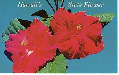 Red Hibiscus, State Flower of Hawaii, Vintage Postcard