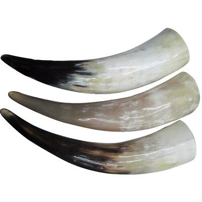 Polished Horn Game of Thrones Large Natural Viking Usable Drinking Oxhorn Horn