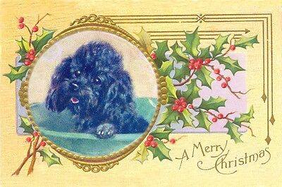 Poodle Dog by Mabel Gear 1940's Drawing New Blank Christmas Note Cards