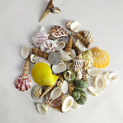 SHELLS Mixed 100 Grams Perfect for Craft Wedding Home Aquarium Decoration