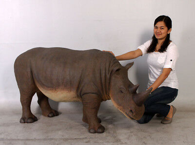 Rhinoceros Small