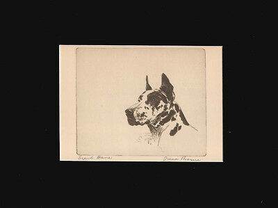 VINTAGE Great Dane NICE Dog  Print 1935 by Diana Thorne 9 X 12 Mat