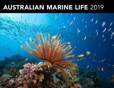 Australian Marine Life 2019 Horizontal Wall Calendar by Browntrout NEW