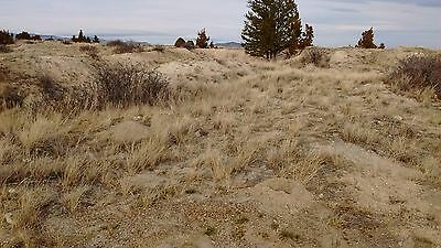Gold Nugget %100 Unsearched Montana Pay Dirt  By The Pound