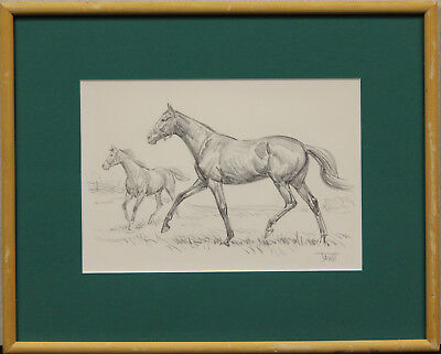 Original Sam Savitt Pencil Drawing of 'Chieftan Colt' from A Ackermann Gallery