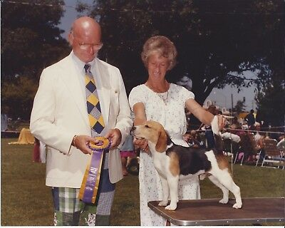 Beagle Show Photo CH THE WHIM'S RULE THE ROOST, BOV Lompoc KC 1982 w. Jenner