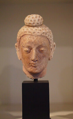 Very Nice Authentic 4th Century A.D. Gandhara 犍陀罗 Stucco Gautama Buddha Head
