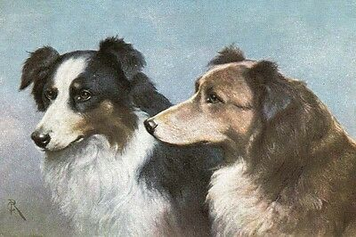 Border Collie Dogs by Carl Reichert pre1918 - LARGE BLANK NOTE CARDS