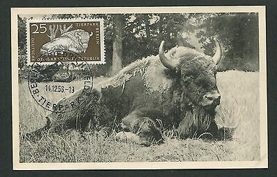 DDR MK 1956 TIERPARK BERLIN WISENT BISON MAXIMUMKARTE MAXIMUM CARD MC CM d4909