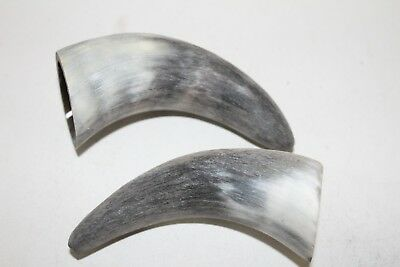 2 Cow horn tips  ....  x2d86  ... raw, unfinished,  cow horns.,..