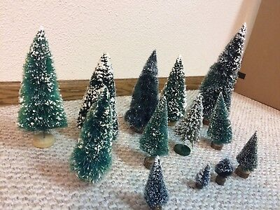 Lot of 13 Pine Trees Miscellaneous Sizes
