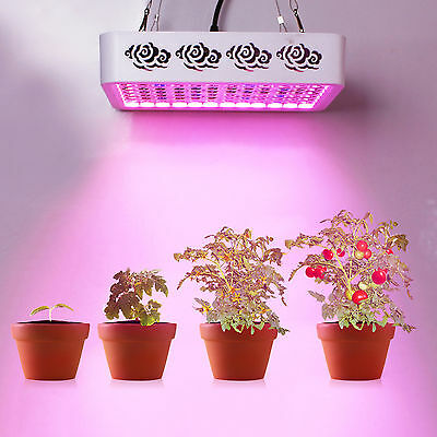 300W Reflector LED Grow Light double chips Veg Flower Medical Plants growth lamp