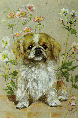 Pekingese Puppy Dog Drawing by Mabel Gear 1940's - LARGE New Blank Note Cards