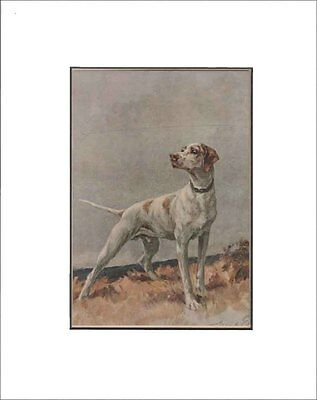 Antique Pointer Dog Print by Maud Earl 1912 8x10 Matted