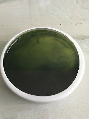 LIVE PHYTOPLANKTON (Tetraselmis) Disk for Starter Culture