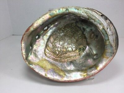 """VINTAGE LARGE  Mother of Pearl Abalone Iridescent Paua Sea Shell 8"""" x 6"""""""