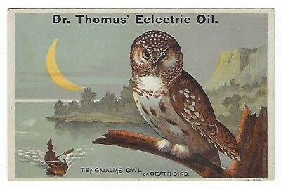 Dr. Thomas Eclectric Oil late 1800's medicine trade card - Tengmalm's Owl