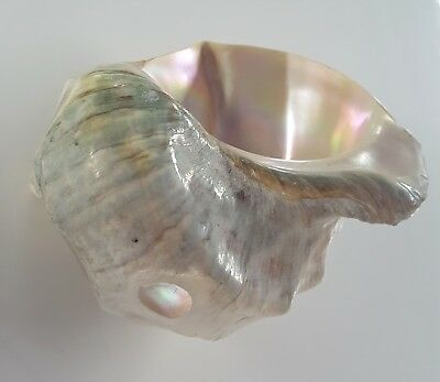 Large Vintage Abalone  Mother of Pearl Sea Shell