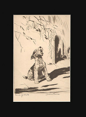 Wire Fox Terrier Dog Puppy  Print 1935 by Diana Thorne 10 X 13 Matted HOWLING!