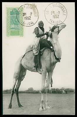 AOF SENEGAL MK 1952 KAMEL CAMEL MAXIMUMKARTE CARTE MAXIMUM CARD MC CM cb72