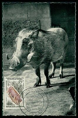 SENEGAL MK 1960 WARZENSCHWEIN HOG BOAR PIG MAXIMUMKARTE MAXIMUM CARD MC CM h0634