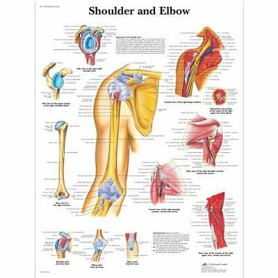 Shoulder and Elbow - Orthopedics * Anatomy Poster * Anatomical Chart Company