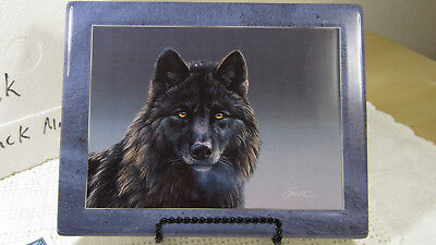 Bradford Ex. Limited Ed. Wolf Plate Black Magic Leaders Of The Pack - Gorgeous