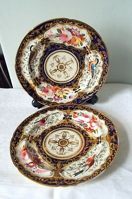 Pair of ANTIQUE  Regency COALPORT hand painted  bird  and  flower blue scale