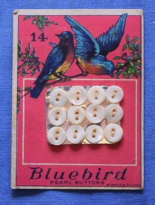 6540  vintage Bluebird mother of pearl shell button card, Bluebird graphic