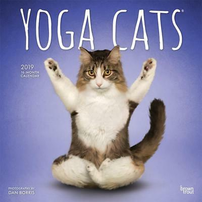 Yoga Cats 2019 16-Month Square Wall Calendar by Browntrout