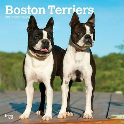 Boston Terriers 2019 16-Month Square Wall Calendar by Browntrout
