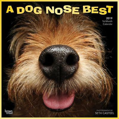 Dog Nose Best 2019 16-Month Square Wall Calendar by Browntrout