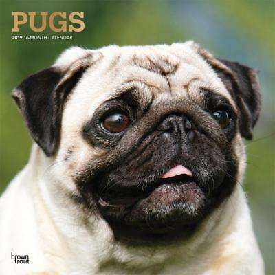 Pugs 2019 16-Month Square Wall Calendar by Browntrout