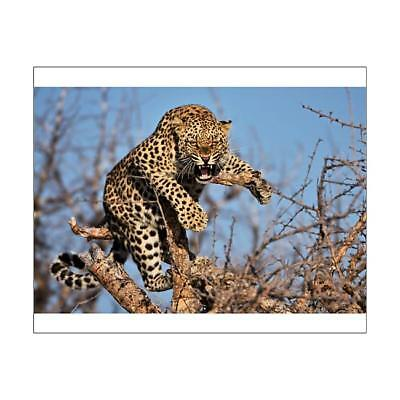 "10""x8"" (25x20cm) Print of Hissing leopard on a tree in Namibia from"