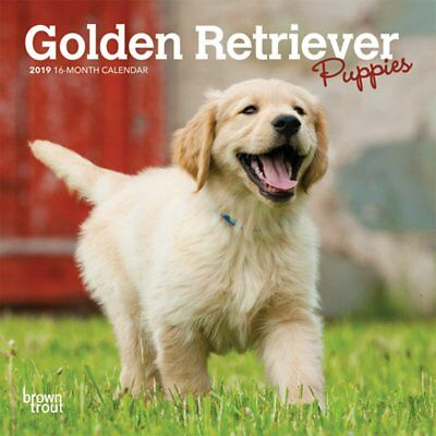 2019 Golden Retriever Puppies 16-Month Mini Wall Calendar, Browntrout