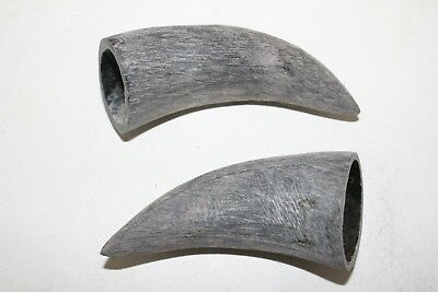 2 Cow horn tips ....  02d88 ... Raw, unfinished cow horns.,.....