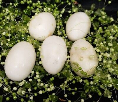 5 Alabaster Marble Decorative EASTER/BIRD Eggs Off White  Colored  Contoured