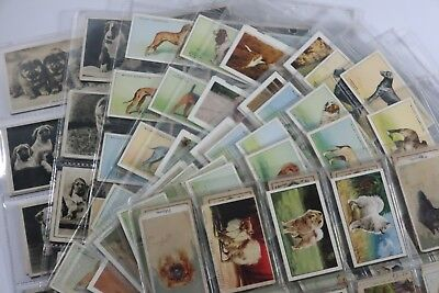 Big collection of 1930's dogs cigarette cards in holders SNK913